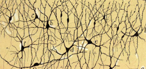 amón y Cajal tería que adaptarse: xa non se pode traballar en soidade